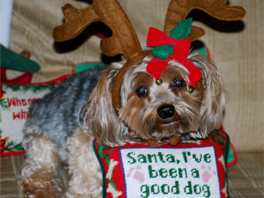 Is this sweet little pooch as innocent as they seem?