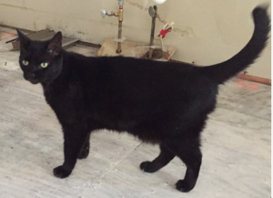 Marley is a social boy that was a feral cat prior to meeting his pet parents and choosing a life of domestication.